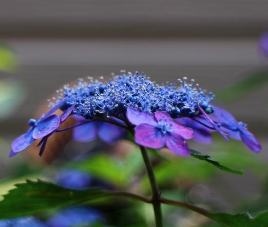藍姫2.jpg
