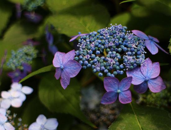 藍姫3.jpg